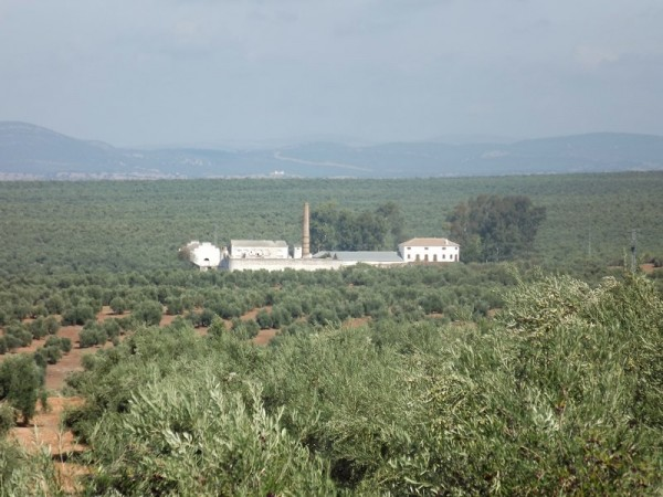 Cortijo Salido Bajo  - Inside Andalusia - Jaen