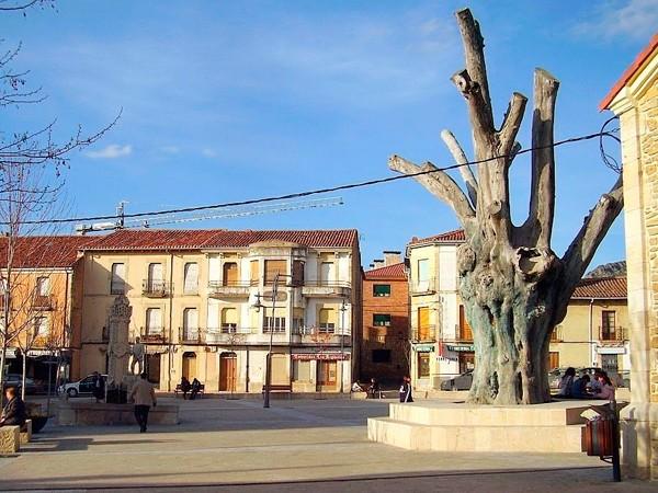 en la plaza, el negrillón, olmo centenario del siglo XVI