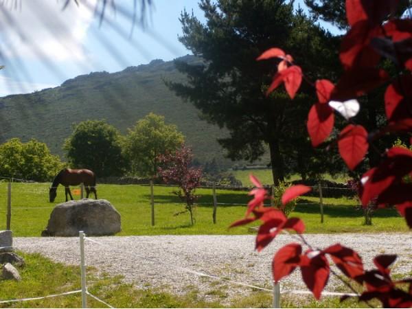 La Solana - Posada De Caballos  - Cantabrian Mts. - Asturias