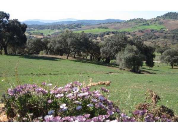 Casa Jazmín  - West Andalusia - Cadiz