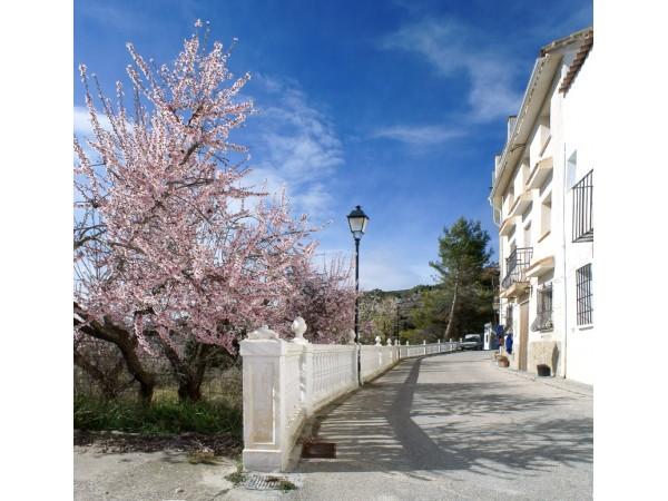 Cantacuc  - Valencia - Alicante