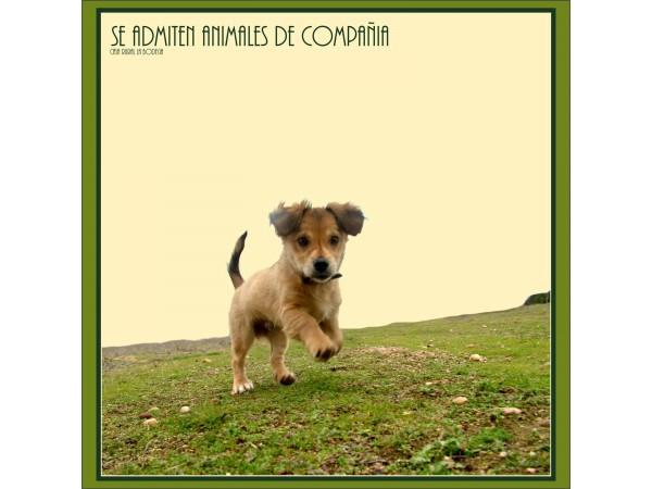 ADMITE ANIMALES DE COMPAÑIA