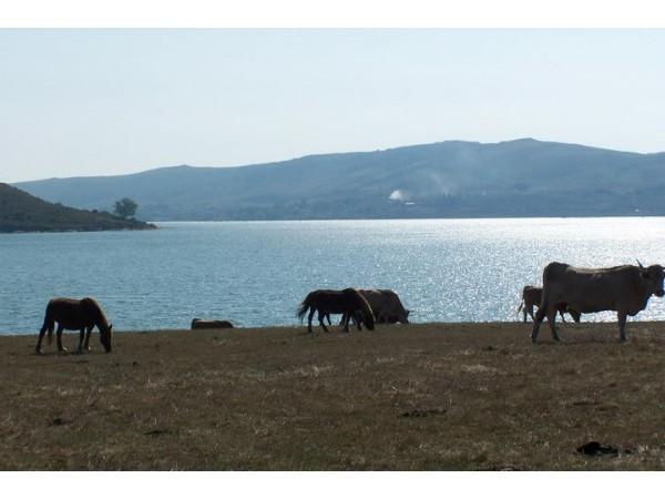 La Casa Del Lago De Campoo  - Cantabrian Mts. - Cantabria