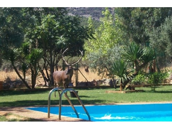 Casa Rural Los Galápagos  - South Castilla - Ciudad Real