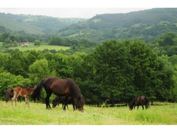 Apartamentos La Pontiga  - Cantabrian Mts. - Asturias