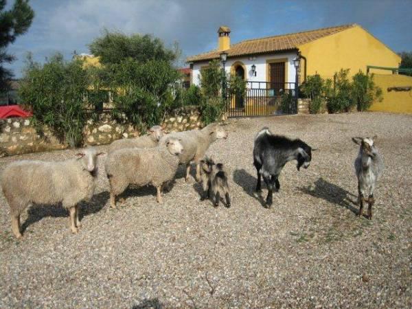 Centro Rural Mirador De La Alcaidia  - Binnen Andalusië - Cordoba