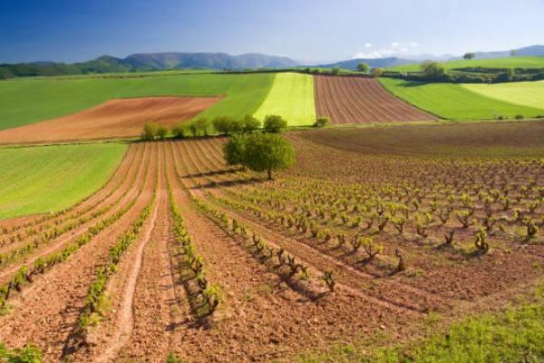 Señorio De Moncalvillo  - Rioja - La Rioja