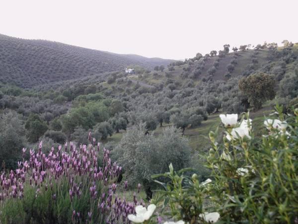 Las Vegas Del Tio Pedro  - Inside Andalusia - Cordoba