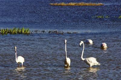 Visita al Parque Natural de Els Aiguamolls de l´Empordà