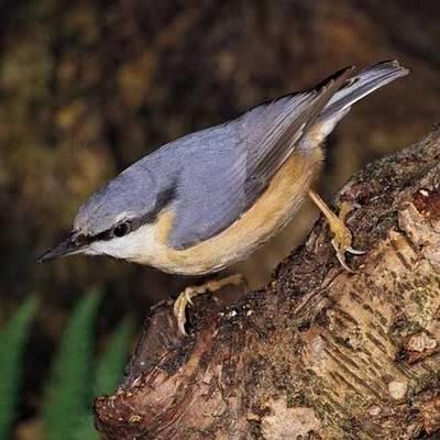 Paseo ornitológico con guía en Bertiz