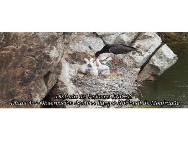 Monfragüe Natural