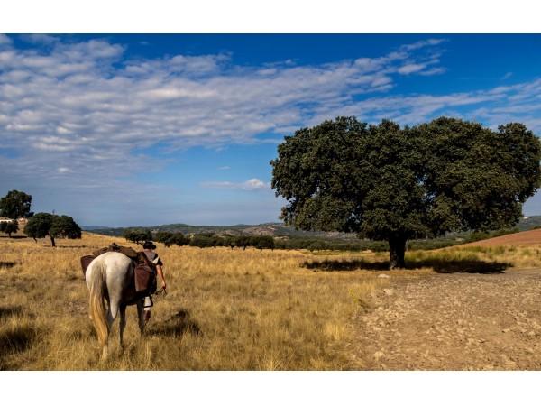 Cabal-natur