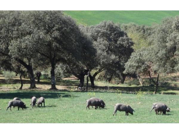 Casa Rural Azahar