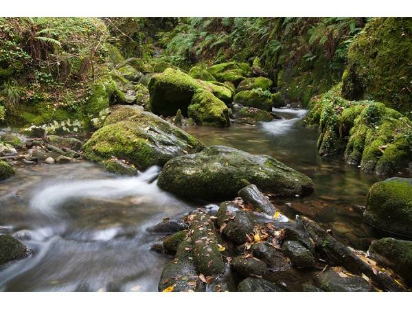 Ruta de la Piedra y el Agua