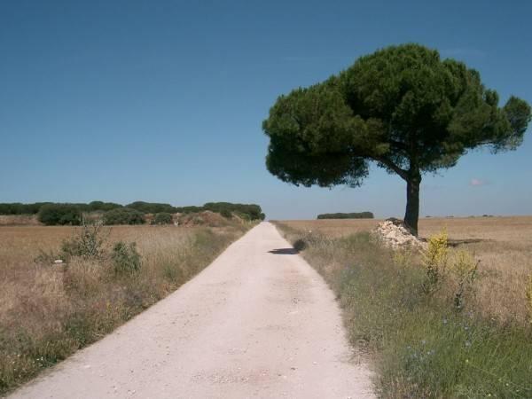 Ruta de la Solana