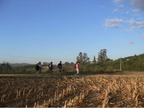 El Camino de Santiago organizado
