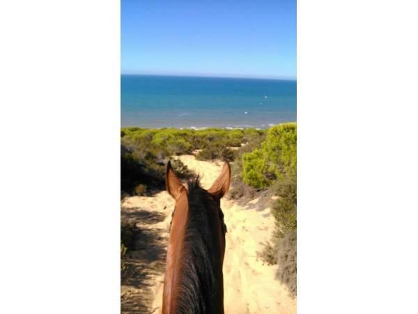 Parque Natural De Doñana a caballo