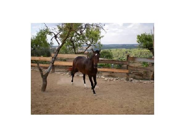A cavall per la vall del Corb