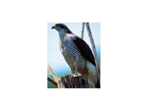 Observatorio de Aves en Las Hurdes