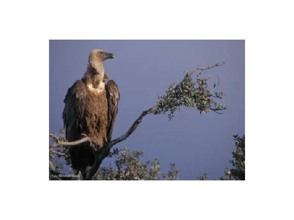 Ruta TRINO: Pueblos y Escarpes (Ruta Ornitológica)