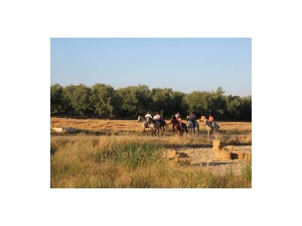 A caballo media jornada desde Cortijo Las Minas