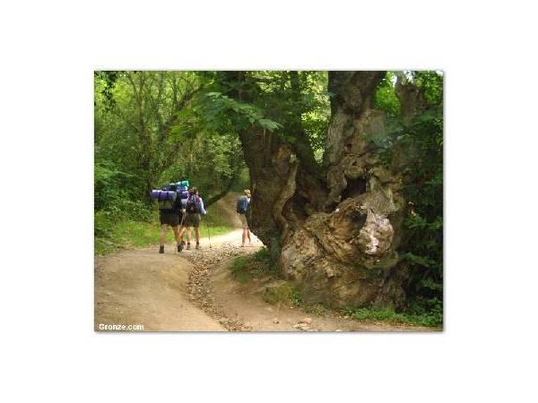 Camino de Santiago (Sarria-Portomarin)